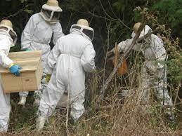 Guardas Municipais são capacitados para captura de enxame de abelhas