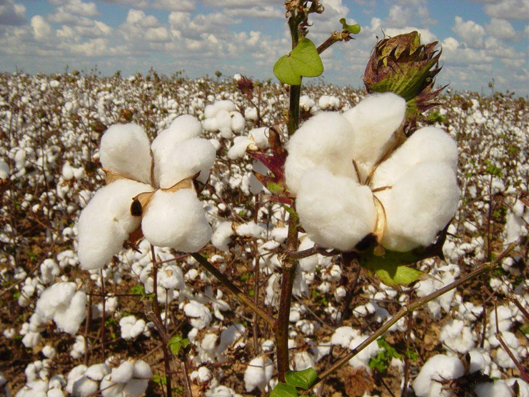 PIB do agroneg�cio baiano cresce 4% no primeiro trimestre
