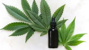 Anvisa libera uso medicinal da maconha mas proibe o plantio