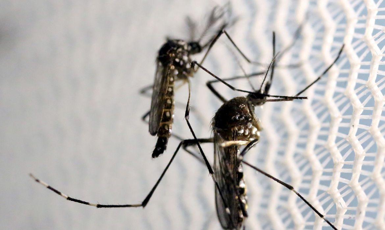 Pessoas que tiveram dengue são propensas a ter sintomas da covid-19